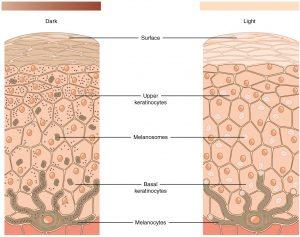 công dụng niacinamide hỗ trợ mờ thâm sáng da