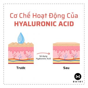 cơ chế hoạt động của Hyaluronic Acid
